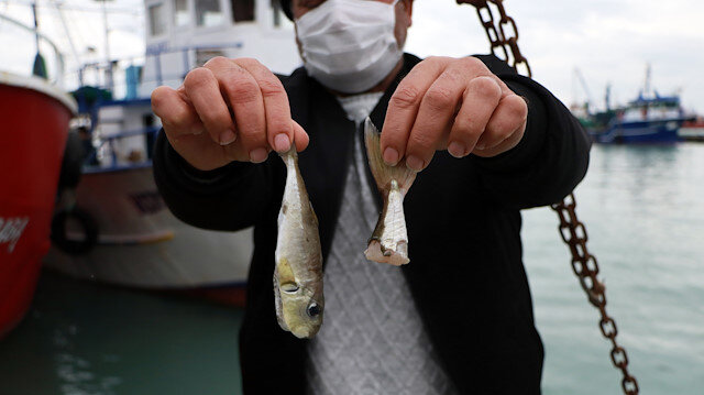 Balıkçıların talebi: Balon balığının diğer türlerine de kuyruk parası istiyoruz
