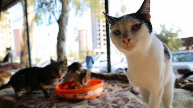 Ankara Belediyesine ait hayvan bakımevinde kedi katliamı iddiası: 20 kediye ötanazi yapıldı