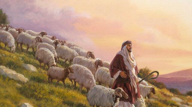 Çam sakızı, çoban armağanı