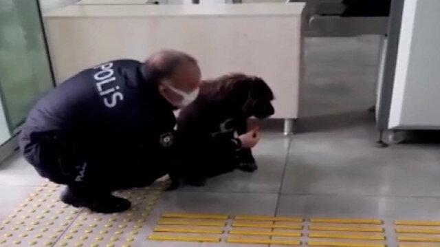 Antalya'da yağmurdan ıslanan köpeğe, polis şefkati