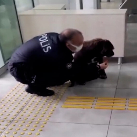 Antalyada yağmurdan ıslanan köpeğe, polis şefkati