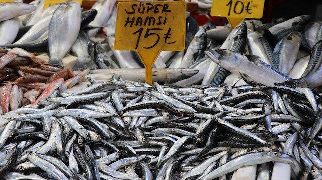 Ünlü balıkçıdan küçük hamsi uyarısı: Hamsi yasal sınırın altında yakalanıyor, gelecek için riskli