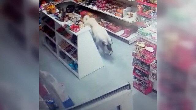 Sivas'ta marketten bir süre düşündükten sonra bisküvi alıp çıkan köpek kamerada