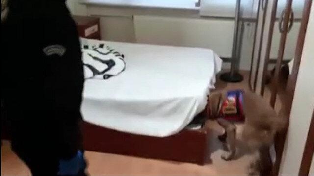 Uyuşturucunun yerini jandarma köpeği 'Atak' gösterdi: İki kişi tutuklandı