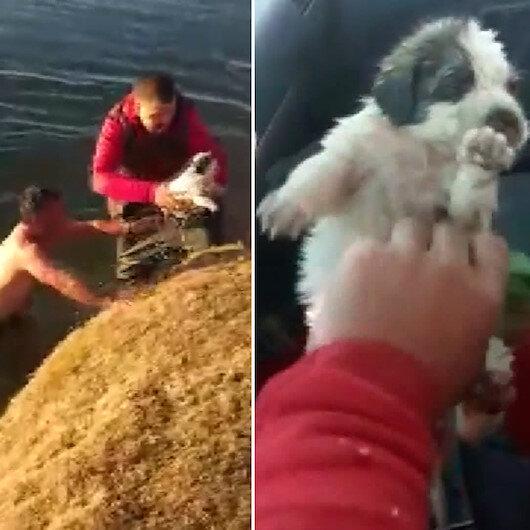 Vanda yürekleri ısıtan görüntü: Buz gibi suya girip çaya düşen yavru köpeği kurtardı