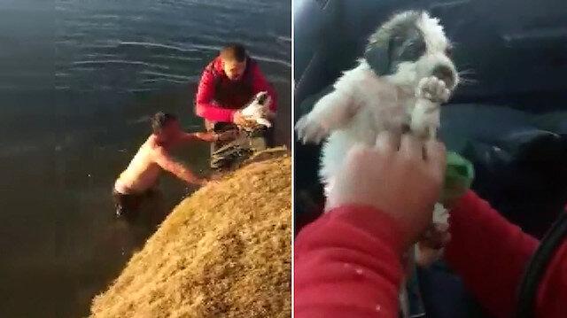 Van'da yürekleri ısıtan görüntü: Buz gibi suya girip çaya düşen yavru köpeği kurtardı
