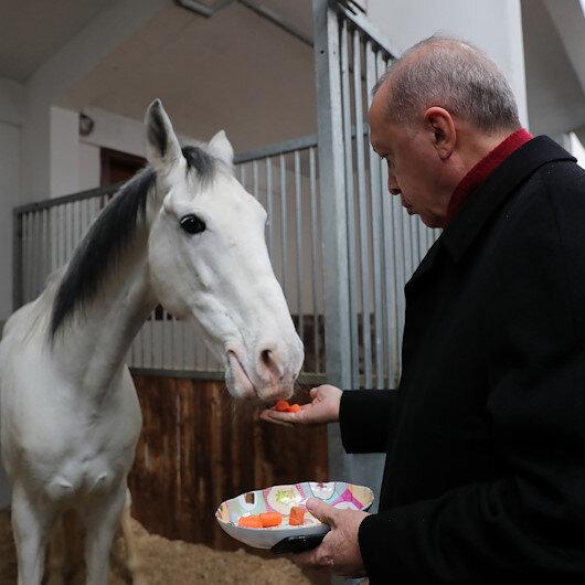 Cumhurbaşkanı Erdoğan atları elleriyle besledi