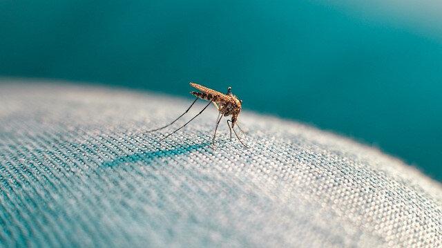 Hava sıcaklığı sivrisinekleri de etkiledi: Ocak ayında bile görülüyor