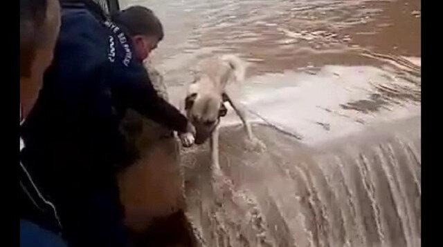 Osmaniye'de belediye işçileri su bendi üzerinde mahsur kalan köpeği canları pahasına kurtardı