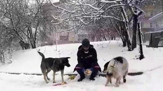 Ümraniye'de temizlik görevlisinden iç ısıtan davranış: öğle yemeği kumanyasını sokaktaki hayvanlarla paylaştı