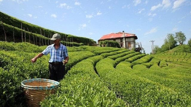 Türk çayını 2020'de en çok Belçika talep etti: 5 milyon dolarlık ihracat