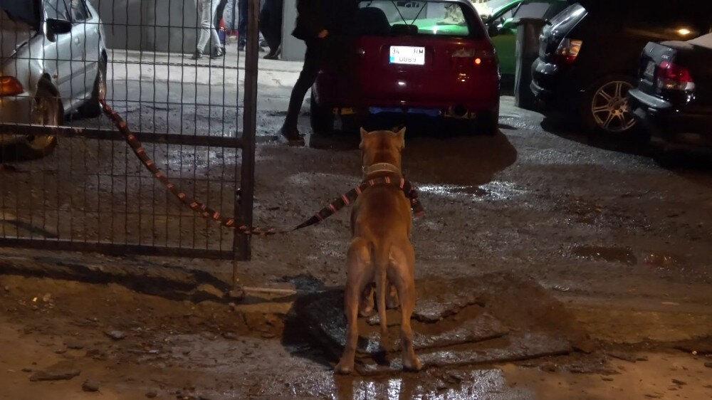 Tamirhaneden çıksa da çevresinden ayrılmayan pitbull, yoldan geçen pitbull sahibi başka bir vatandaş tarafından bağlandı.