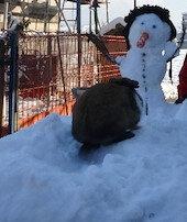 Kardan adamın burnunu yedi