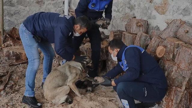 Donmak üzere olan yavru köpekleri Belediye ekipleri kurtardı