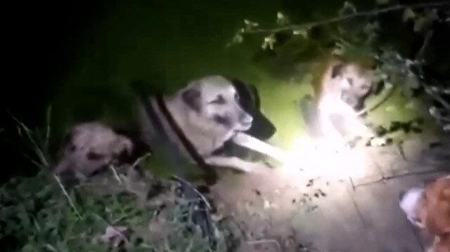 Samsun'da su kanalına düşen dört köpek boğulmak üzereyken kurtarıldı