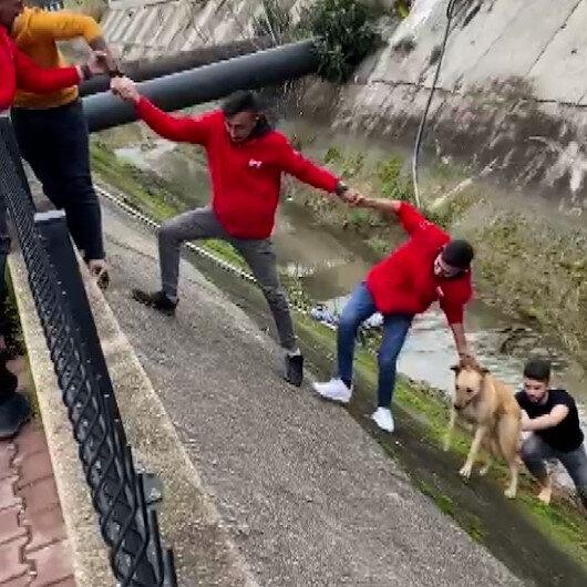 Su kanalına düşen köpek el birliğiyle kurtarıldı