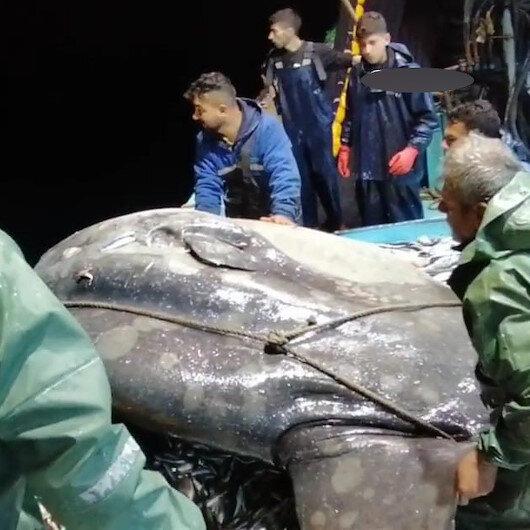 Adanada balıkçılar yakaladıkları dev balığı denize geri bıraktı