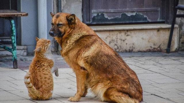 Kedi ve köpek kulübesi alınacak