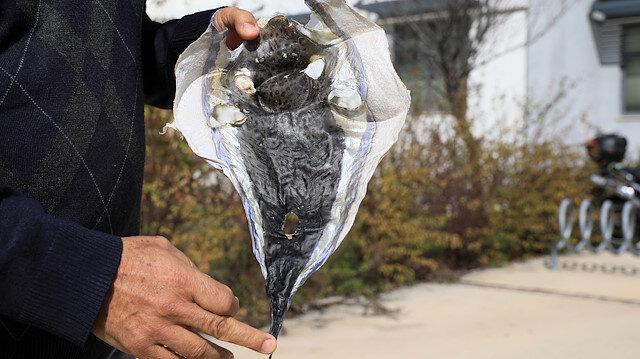 Dikkat çeken öneri: Balon balığının derisi cüzdan yapılsın