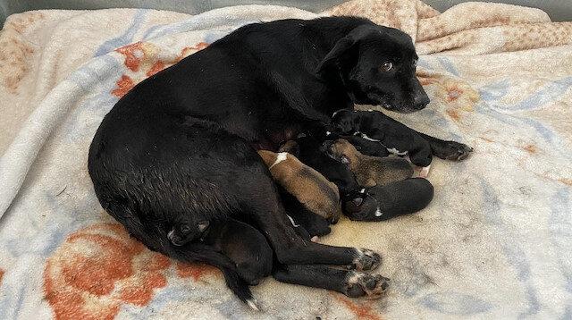 Esenyurt'ta donmaktan son anda kurtarılan yavru köpekten iyi haber geldi