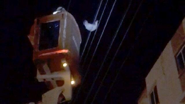 Antalya'da şaşırtan görüntü: Tavuk elektrik telinde takılı kaldı