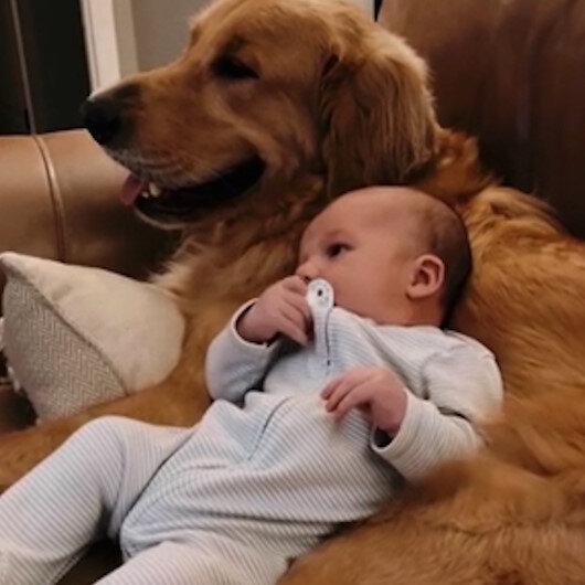 Sadece köpeğinin karnına yattığında sakinleşen bebeğin içinizi ısıtacak görüntüleri