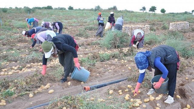 Bakanlıktan patates ve soğan açıklaması: Kısıtlama yok