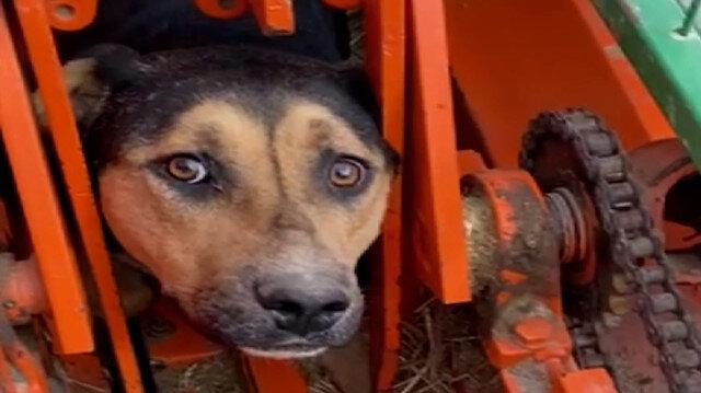 Kafası tarım aracına sıkışan köpek kurtarılmayı bekledi