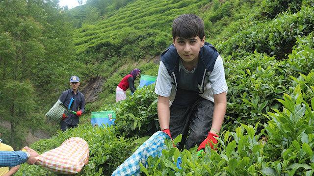 Kırmızı Karadeniz'e 'çay göçü' öncesi kritik uyarı: 100 binin üzerinde üretici gelecek vakaları düşürmeliyiz