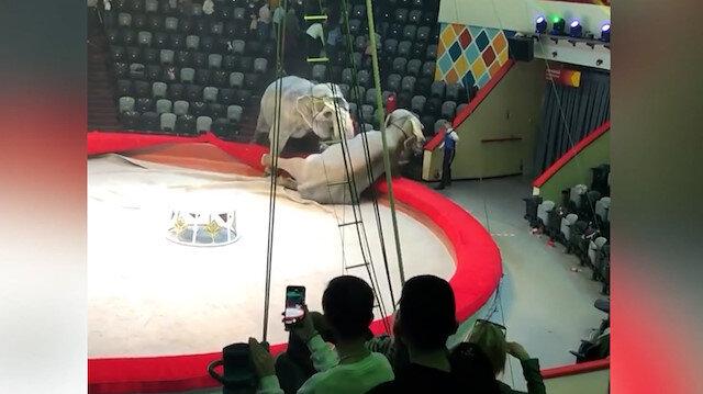 Rusya'da bir sirkte filler birbirine girdi