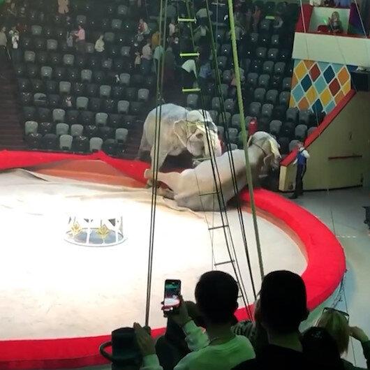 Rusyada bir sirkte filler birbirine girdi