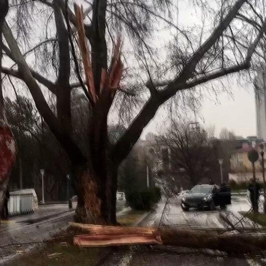 TBMM bahçesine düşen yıldırım sonucu ağaç yarıldı