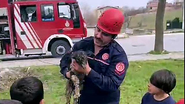 Avcılar'da çukura düşen oğlak, çocukların ihbarıyla kurtarıldı