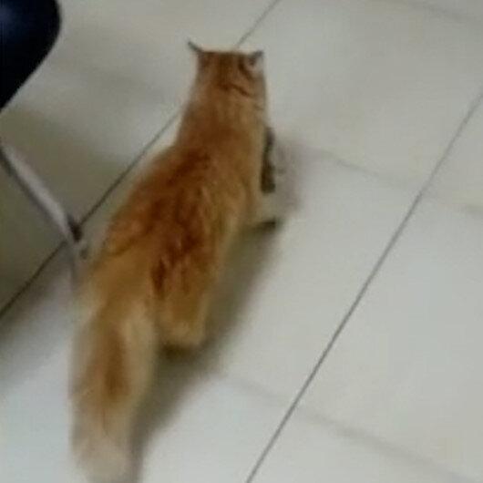 Anne kedi gözleri enfeksiyon kapan yavrularını doktora getirdi - Yeni Şafak