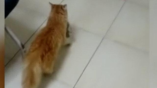 Anne kedi gözleri enfeksiyon kapan yavrularını doktora getirdi