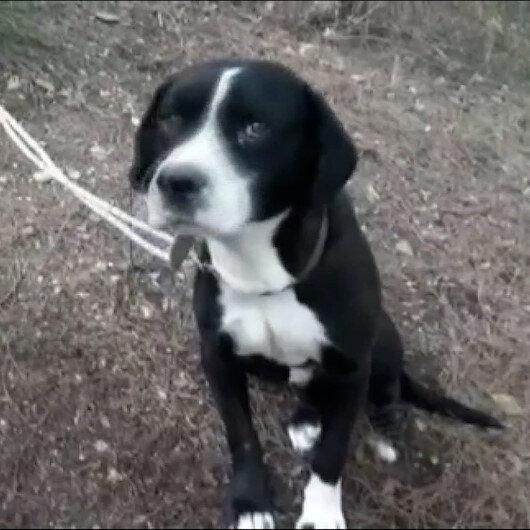 Ormanda ağaca bağlanıp ölüme terk edilen köpek kurtarıldı