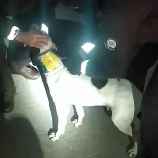 Sakaryada boynuna plastik kelepçe takılan köpeği bekçiler kurtardı