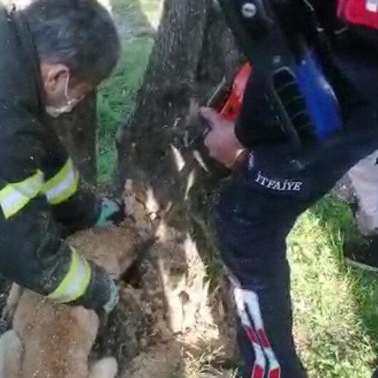 Kafası ağaç kovuğuna sıkışan köpek kurtarıldı