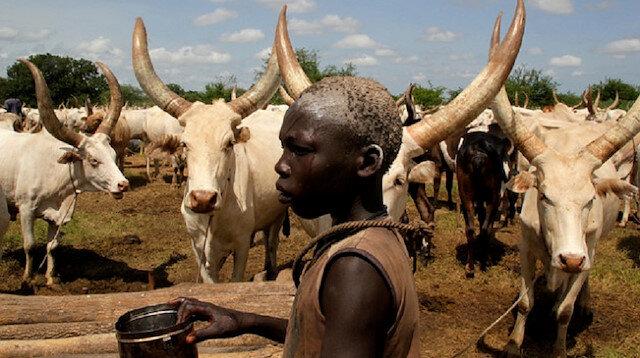 Bir Afrika çıkmazı: 1 milyar 250 milyon ineğe rağmen süt tozu ithal ediyor