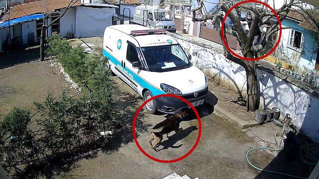 Köpeğin saldırısından kaçan kuryenin ağaca çıktığı anlar kamerada