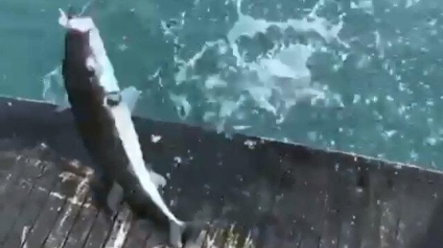Antalya Lara sahilinde zehirli balon balığı sürüsü görüntülendi
