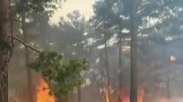 Denizli'de orman yangını: 4 hektarlık alan zarar gördü
