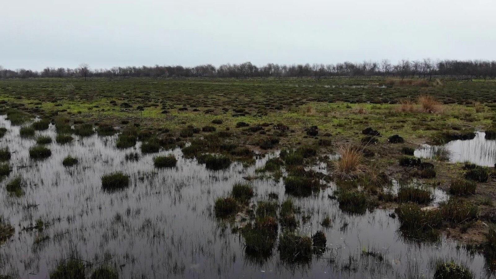 Kızılırmak Deltası Kuş Cenneti'nde, 15 Eylül 2020 tarihinde çıkan yangın sonucunda, uydu görüntülerinden yapılan hesaplamalara göre yaklaşık 108 hektarlık alan zarar gördü.