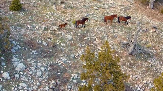 Burdur'da yılı atları drone ile görüntülendi