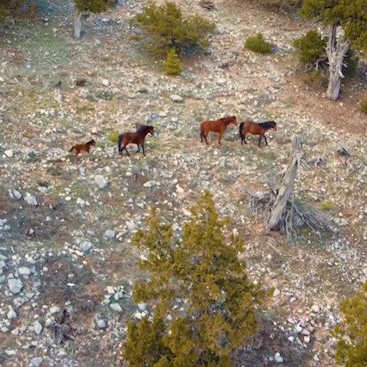 Burdurda yılı atları drone ile görüntülendi