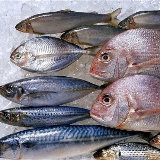 سمك مجاني.. حملة لإقناع الموريتانيين بتغيير عاداتهم الغذائية