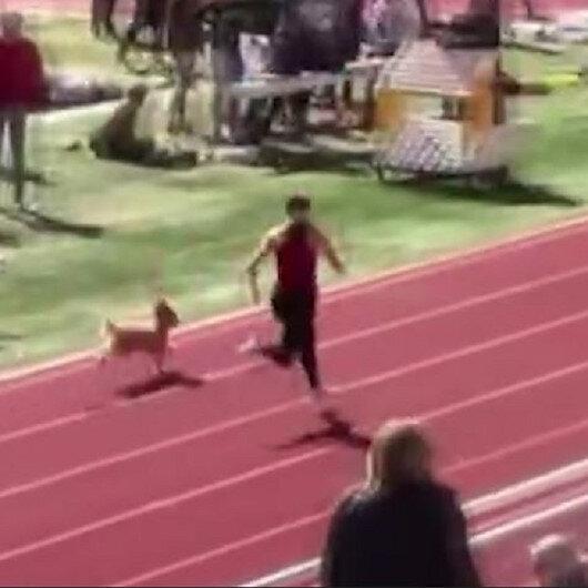 ABD'de tribünden atlayan köpek atletizm yarışmasını birincilikle bitirdi