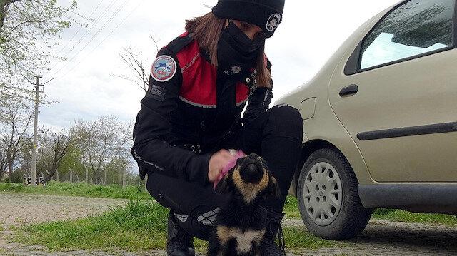 Edirne'de nehre atılan yavru köpeğe polis şefkati