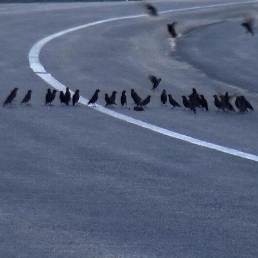Aracın çarparak telef ettiği kuşun başından ayrılmadılar