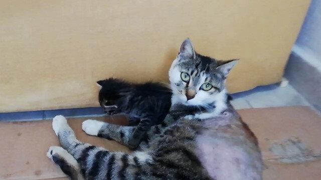 Tüfekle vurularak felç kalan kediyi hayata bağladı
